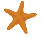 starfish manifesto image wolfgang simson