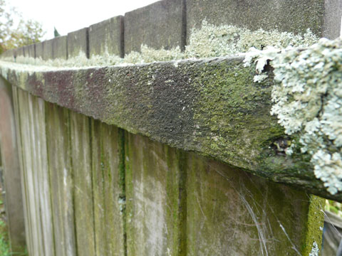 Fence-at-presbyterian-church-st-aidans-northcote-auckland-new-zealand