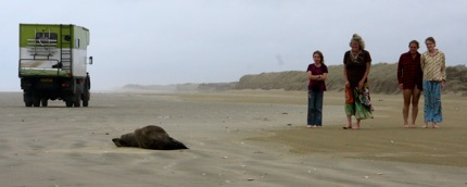 Seal at 90 mile beach