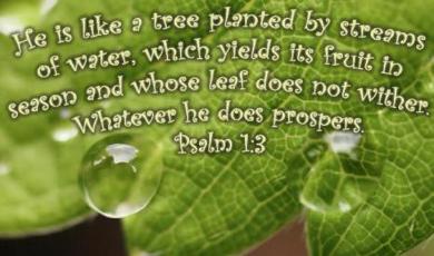 Psalm13-1